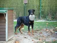 Pension canine - Apache